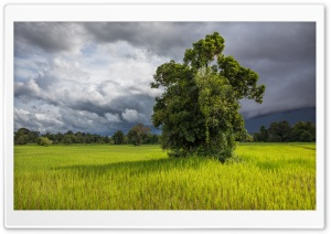 Green Paddy Fields of Don...