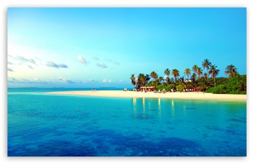 Download Tropical Beach With Palm Trees UltraHD Wallpaper
