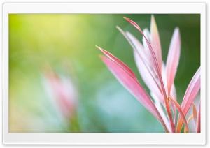 Pink Plant Macro