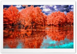 Orange Swamp