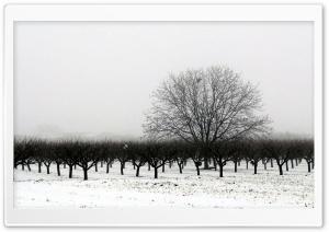 Winter BW