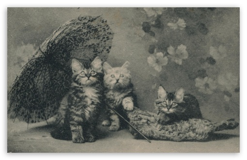 Download Cute Kittens Vintage UltraHD Wallpaper
