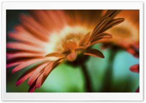 Orange Flower - 1