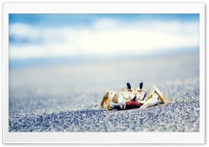 Crab On Sea