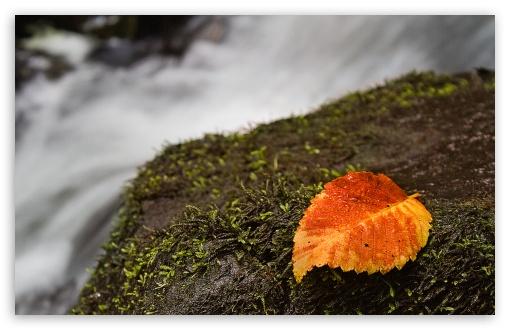 Download Wet Leaf And Moss UltraHD Wallpaper