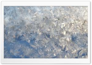 Ice Flowers On A Window