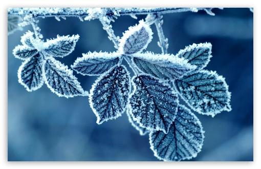 Download Frozen Leaves UltraHD Wallpaper