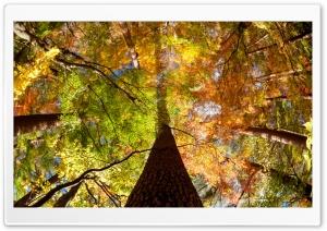 Forest, Fall Fisheye