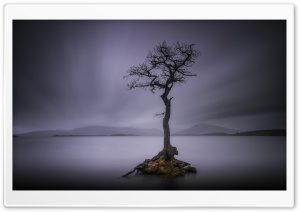 Lone Tree, Calm Water Lake,...