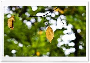 Yellow Hang 2 of 2