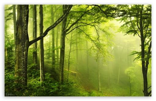 Download Beautiful Green Forest UltraHD Wallpaper