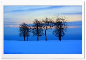 Trees Skyline