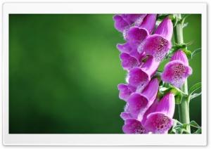 Bell Flowers