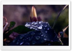 Wet Dark Leaf Macro