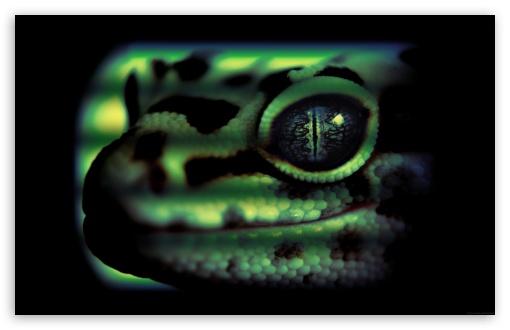 Download Lizard UltraHD Wallpaper