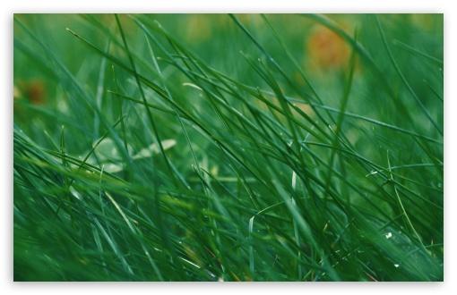 Download Through Green Grass UltraHD Wallpaper