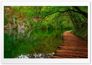 Nature River Wooden Path