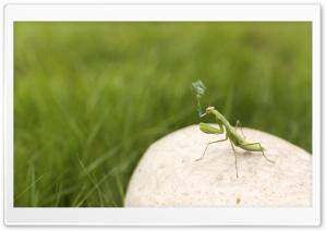 Mantis Smoking