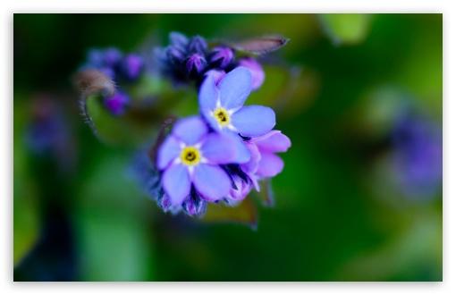 Download Beautiful Purple Flower, Macro UltraHD Wallpaper