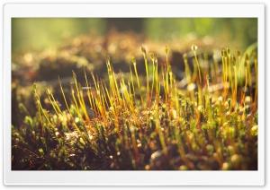 Moss, Morning