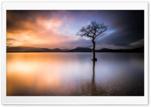 Beautiful Lone Tree, Lake,...