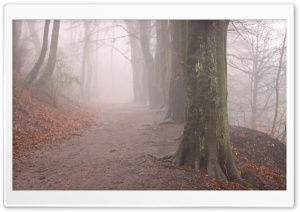 Forest Fog, Autumn