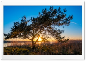 Tree, Sunset, Peenestrom