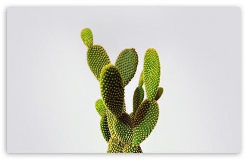 Download Cactus UltraHD Wallpaper