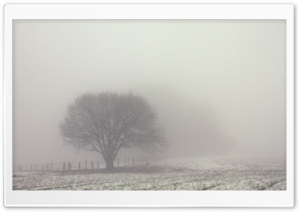 Tree, Fog, Field, Winter, Gloomy