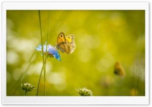 Meadow Butterfly