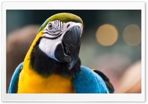 Parrot Ara Ararauna 2