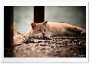 Hd Cat Kedi Resimleri