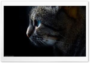 Cat, Animal, Dark