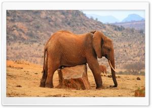 Grounded Elephant