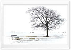A Bench And A Tree