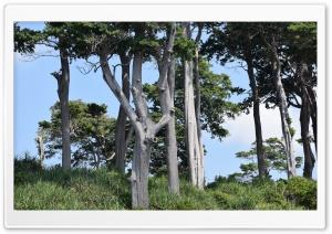 White Barks, Nicobar Islands,...