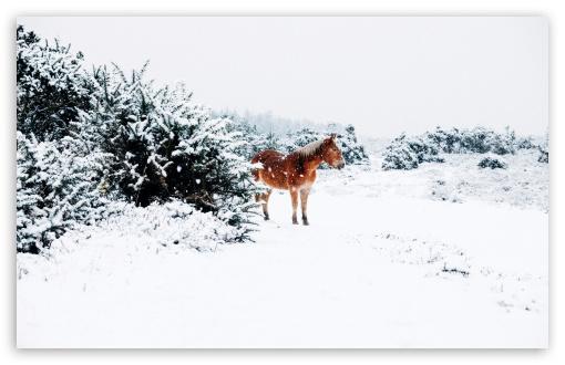 Download Winter Country Landscape UltraHD Wallpaper