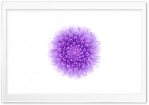 Apple - iOS Flower 2