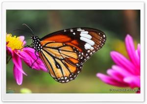 Butterfly Close Shot