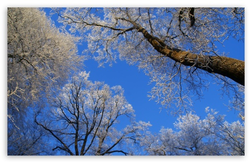 Download White Trees Against A Blue Sky UltraHD Wallpaper