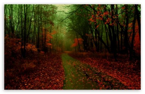 Download Misty Autumn UltraHD Wallpaper