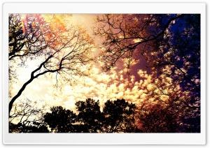 Cielo De Color