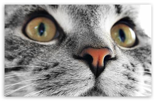 Download Kitty Cat Close Up UltraHD Wallpaper