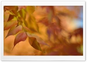 Autumn Leaves, Bokeh