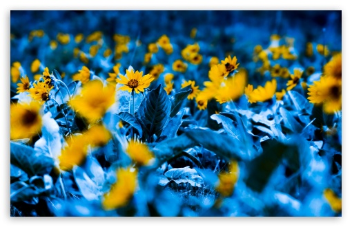 Download Flowers With Blue Leaves UltraHD Wallpaper