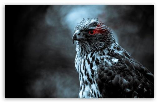 Download Eagle Eye UltraHD Wallpaper