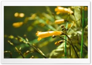 Cherishing Yellow
