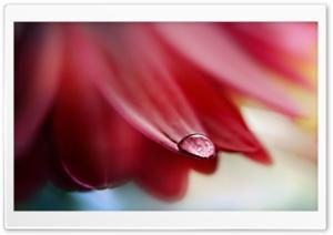 Drop On Flower Petal