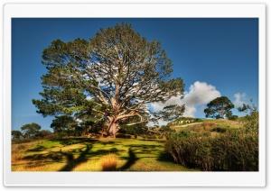 Tree HDR