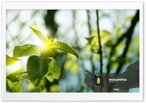 Green Branch, Creative Design